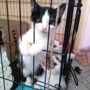 Pomagamy zwierzakom - pierwsza odsłona Dnia Dobrych Uczynków_18