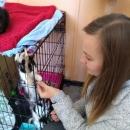 Pomagamy zwierzakom - pierwsza odsłona Dnia Dobrych Uczynków_19