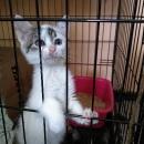 Pomagamy zwierzakom - pierwsza odsłona Dnia Dobrych Uczynków_21